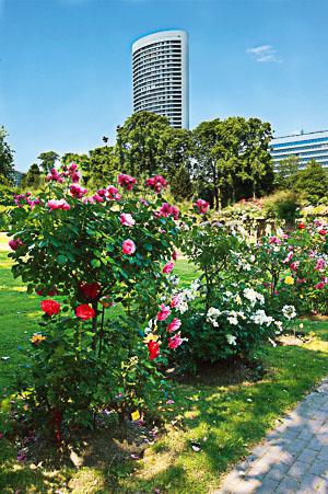 roseraie parc lebaudy