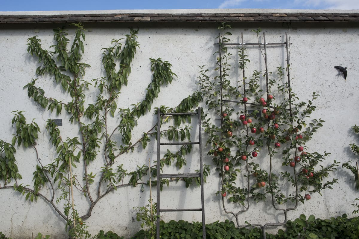 découvertes insolites en Ile-de-France murs à pêches